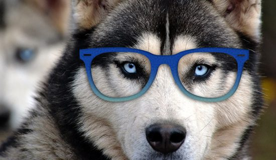 How smart is your dog about debt settlement?